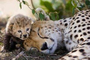 4 straordinarie lezioni di crescita dal regno animale
